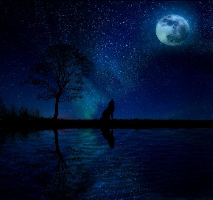 Reflective Sky - D. van Doorn