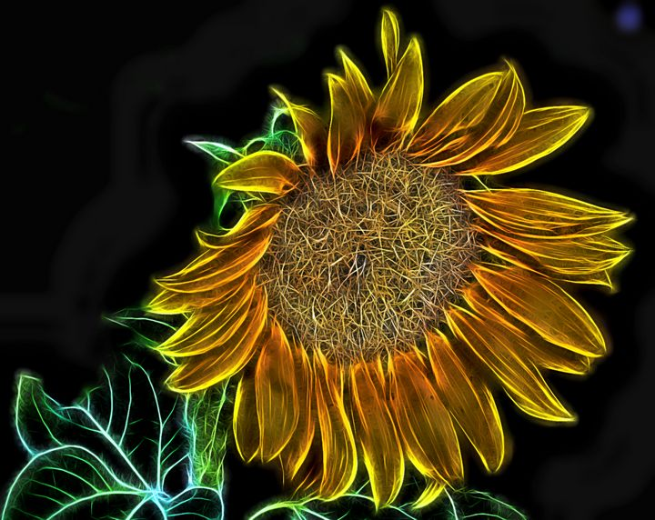 Sunflower Glow - D. van Doorn