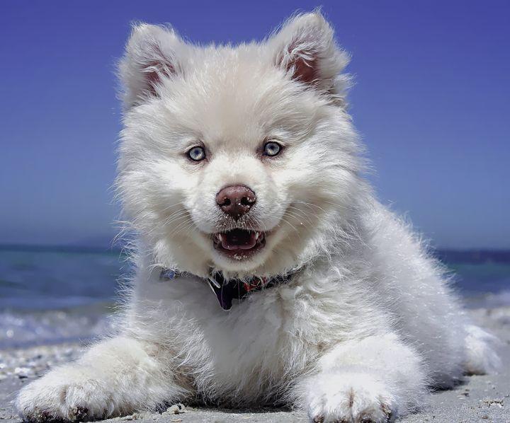 Beach Dog - D. van Doorn