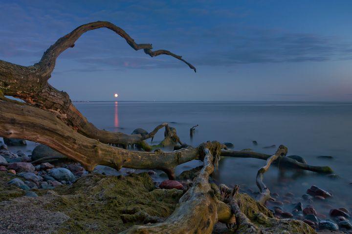 Branched Seascape - D. van Doorn