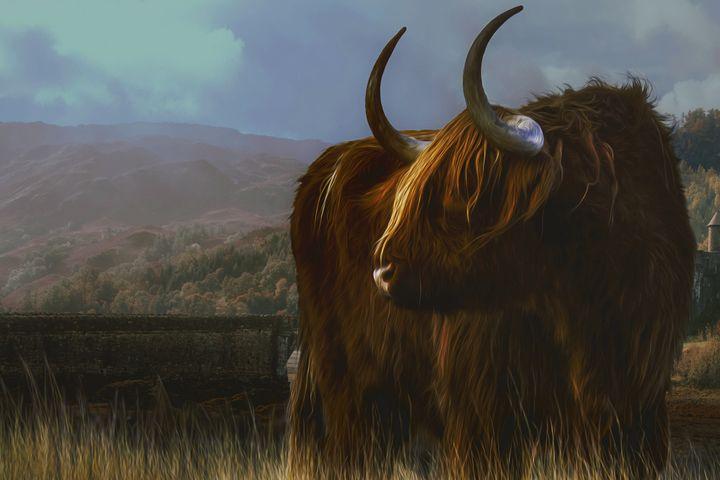 Scottish Highland Bull - D. van Doorn