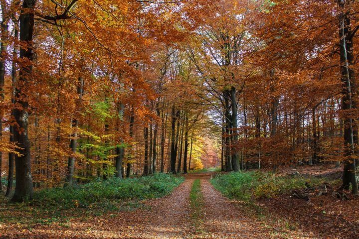 Autumn Forest - D. van Doorn