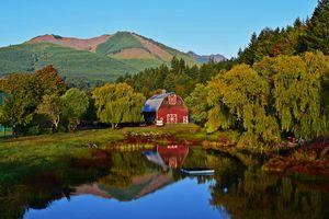 Reflective Farm
