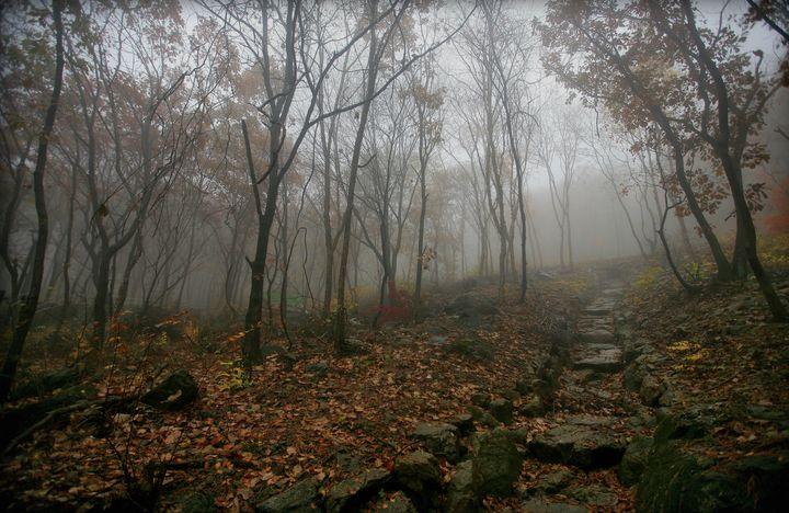 Foggy Forest - D. van Doorn