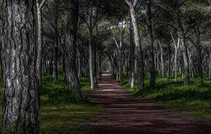 Treeful Trail