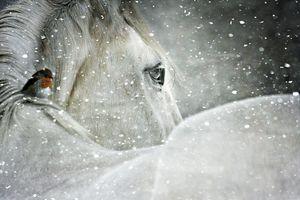 Winter Horse and Bird