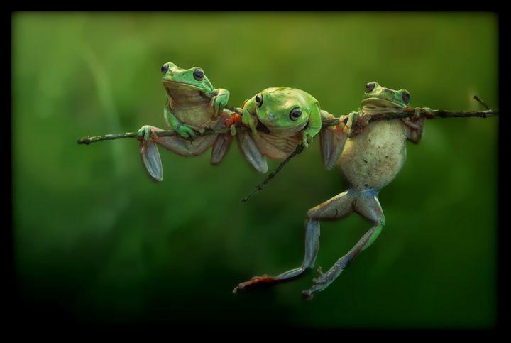 Frogs - D. van Doorn