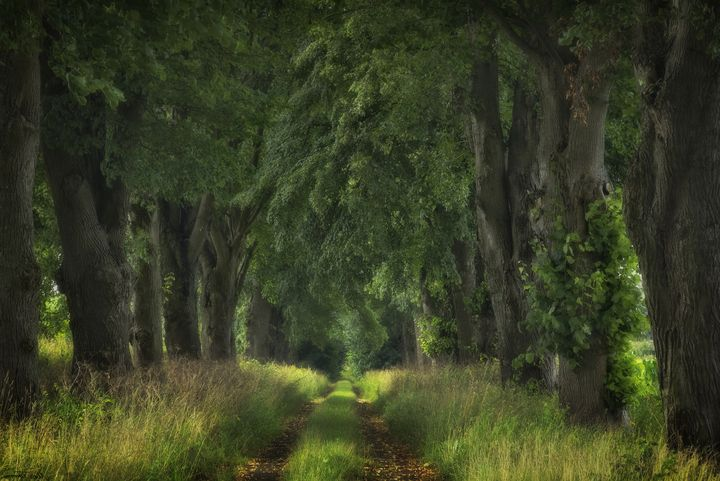Summer Avenue - D. van Doorn
