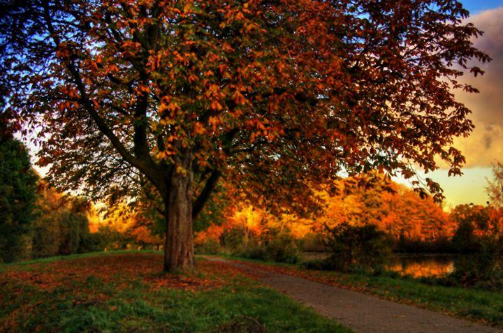 Fall Landscape - D. van Doorn