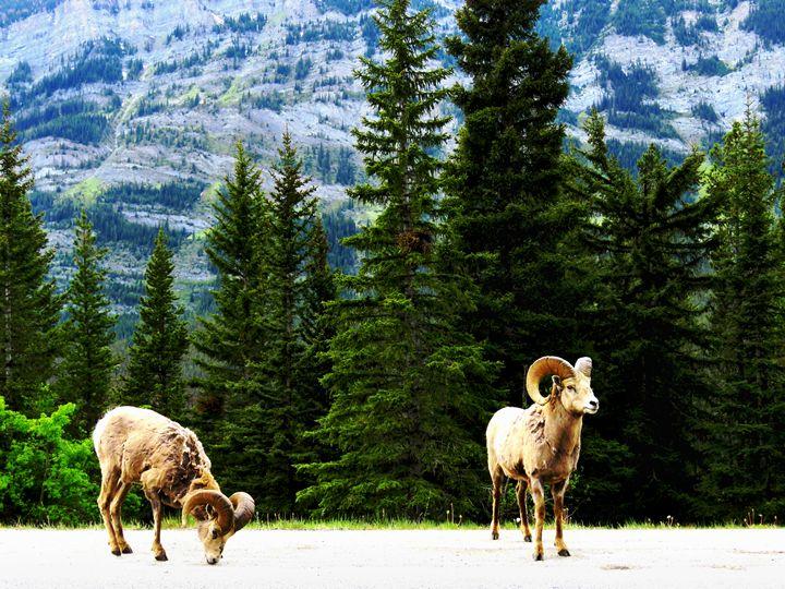 Mountain Goats - D. van Doorn