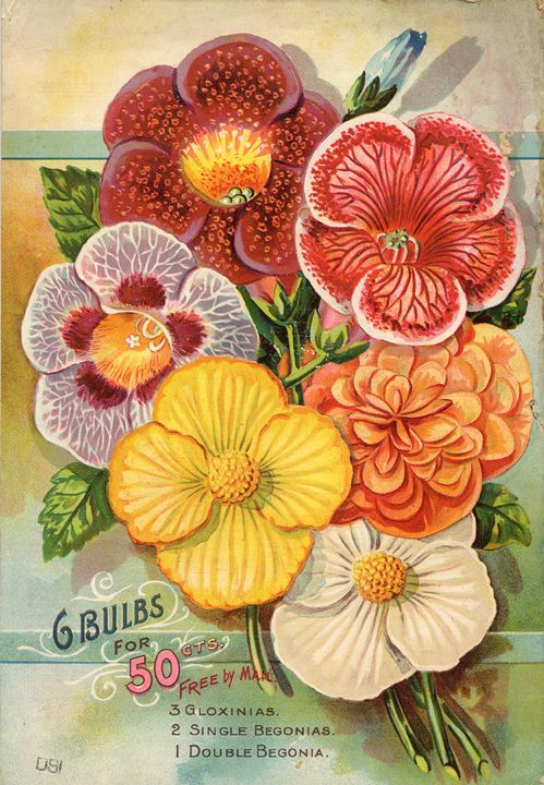 Vintage Flowers - M. Curry
