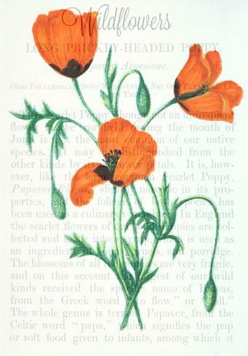 Poppy Flower - M. Curry