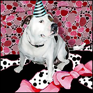 The Party Animal - Jann Paxton  Studio Collection