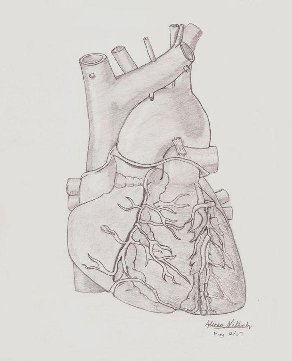 Human Heart - A Little Bit Of Everything