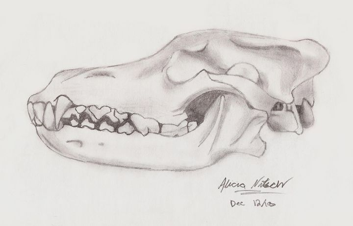 Wolf Skull - A Little Bit Of Everything