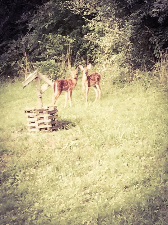 Deer by a Well - FotoLuv