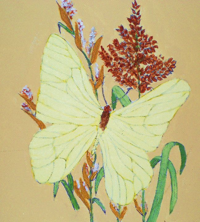 Butterfly - Dan Bader