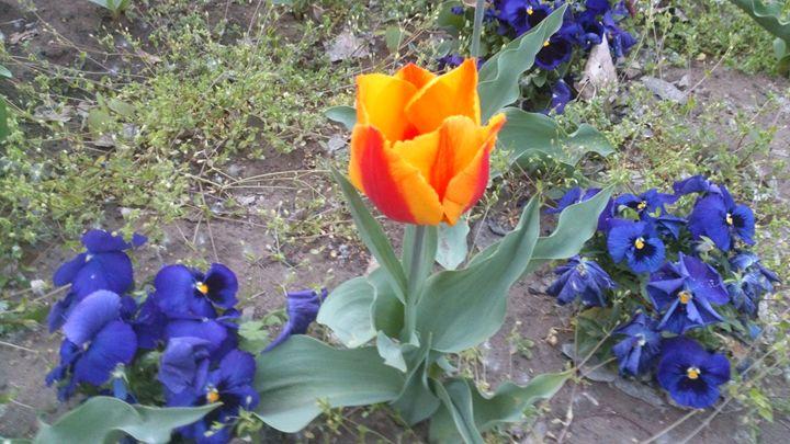 Messengers of the spring - Krisztina Peterfay