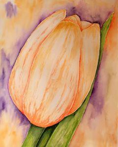A Tulip - Mahjabin