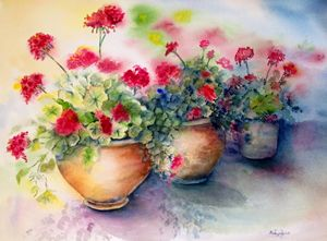 geraniums in pots - Mahjabin