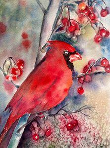 Christmas time- Cardinal - Mahjabin