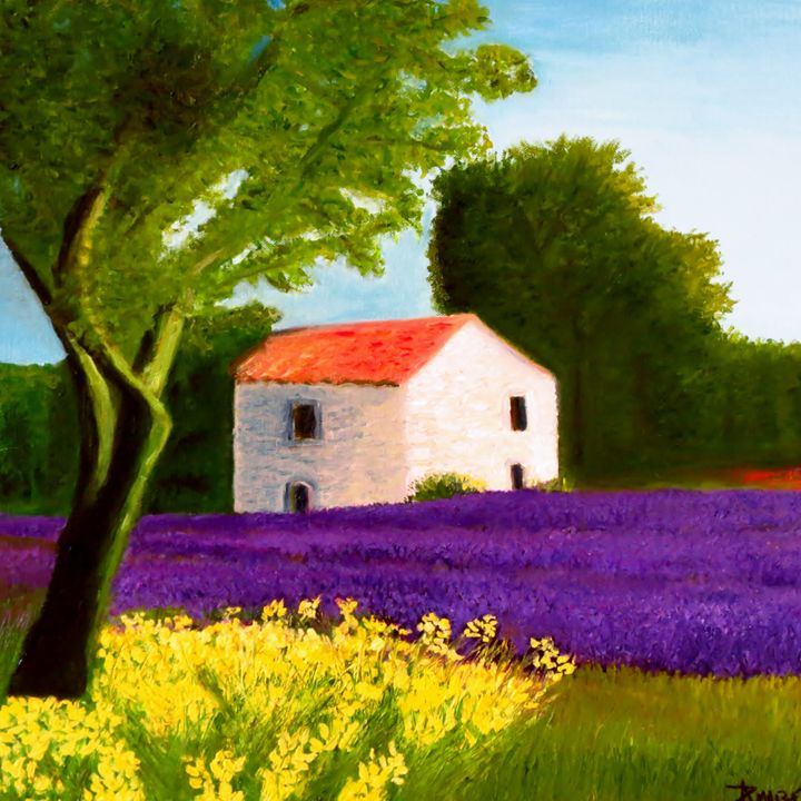 lavender field In Provence - L'Orangerie