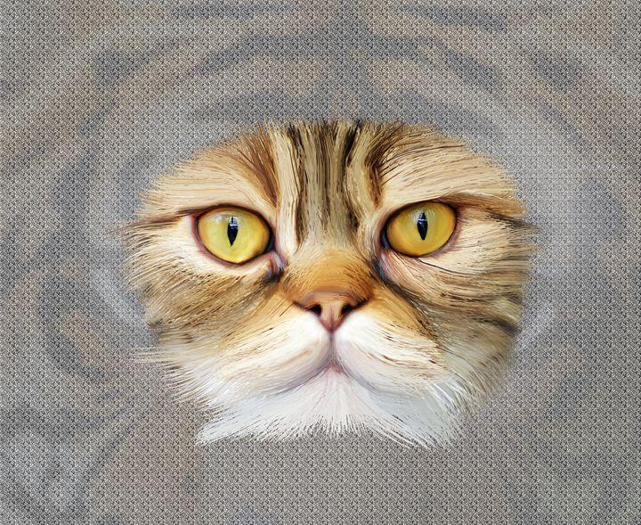 Portrait of brown-eyed cat - Lee went
