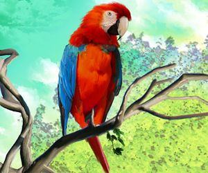 macaw isolated