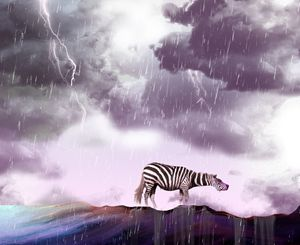 bad weather and zebra