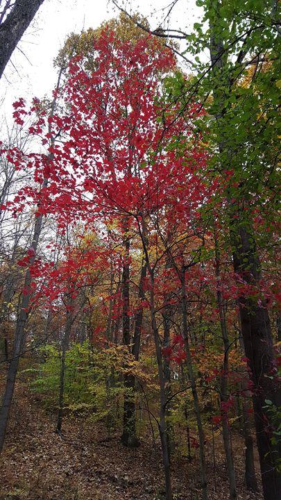 Red Wood? - Dreamweaver Designs