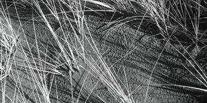 Beach Grass - Steve Keyser Photography