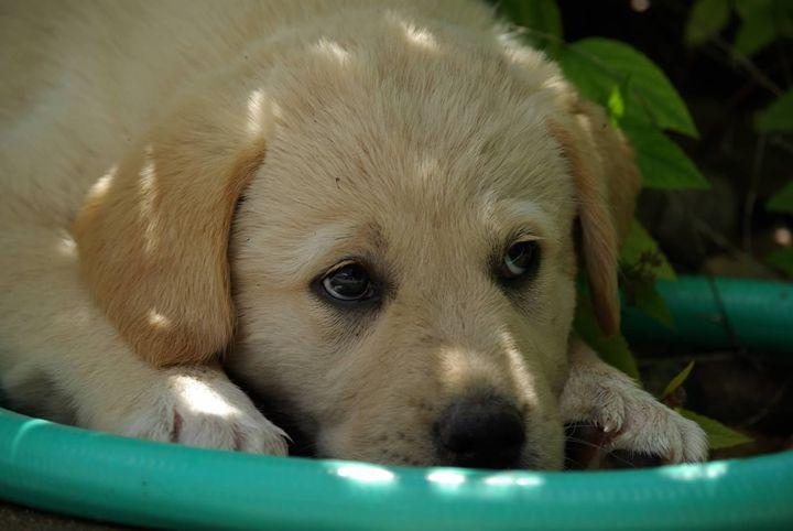 Thinking Pup - Sunshine Trail Rides & Photography