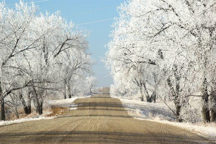 Frosty Path - Sunshine Trail Rides & Photography