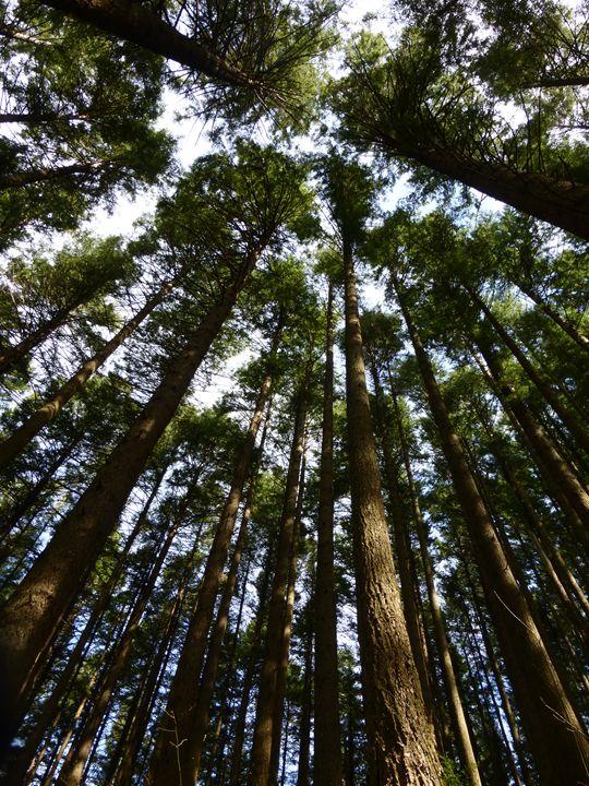 Oregon Trees - Seize the Moment