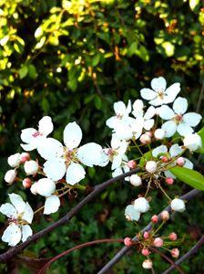 Primavera en la Mañana