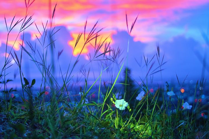 Sunset Flower - Ulrick Lawrence