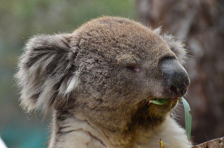 Aussie 2016 - Englishmansart