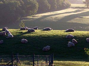 Sheep - Englishmansart