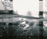 Framed 8x10 Print