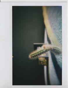 Neighbor Cactus