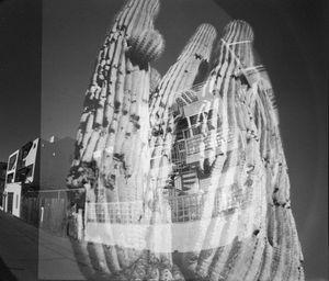 Saguaro,AZ+Snta Monica, Fisheye lens