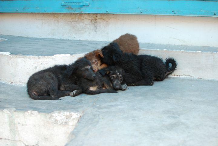 Puppies - Hellz
