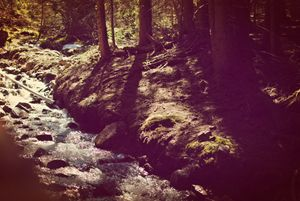 Shady mountain Stream