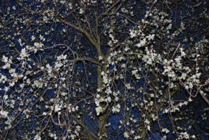 Blossom - Hellz