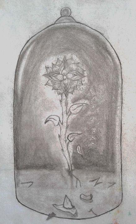 Fragile - Shy Drawing