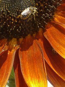 Bee of flower