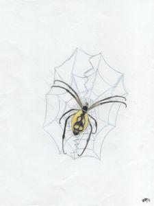 Farm spider