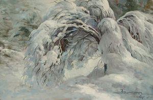 Dogwood in Winter