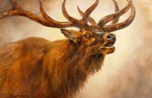 Call of the wild at Geyser Basin - Stefan Baumann