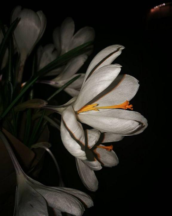 Flower - Alenenok_art